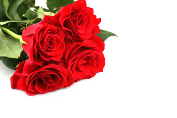 Red roses for Valentines Day or another special day - isolated.