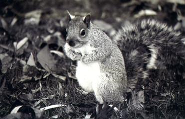Squirrel poses
