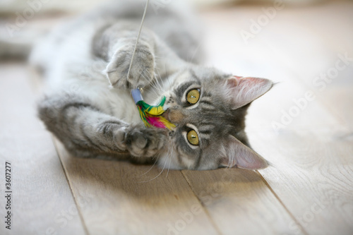 cats spayed neutered