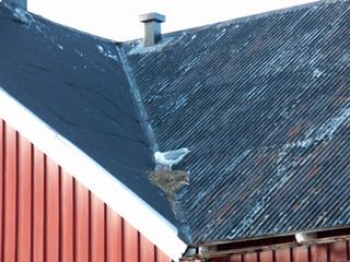 Wall Murals Arctic uccello sul tetto