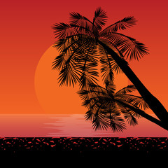 These are silhouettes of palms in rays of sunset