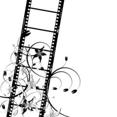 Film strip with flowers over white background