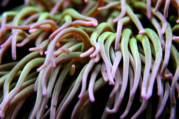 Purple green sea plants