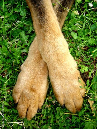 Patte de chien photo libre de droits sur la banque d - Image patte de chien gratuite ...