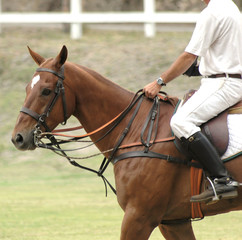 Polo Player & Horse