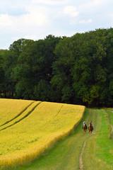 zwei frauen reiten an einem kornfeld entlang