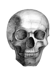 Drawn skull. View from front.