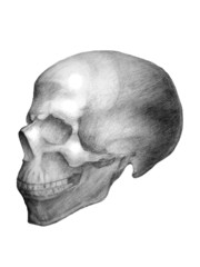Drawn skull. View from the side.