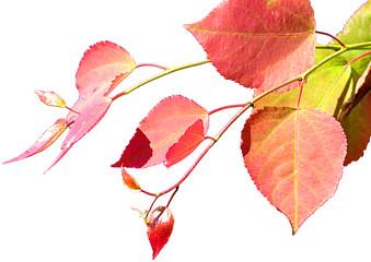 paints of autumn izolated