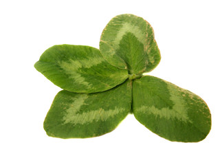 four-leaf trefoil