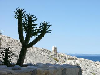 croatie cactus