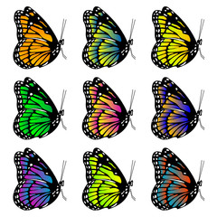 Butterflies with different colors over white background