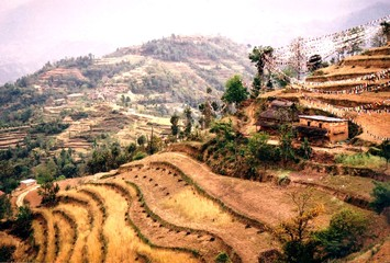 Braune Terrassenfelder in Nepal