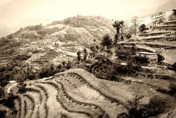 Terrassebfelder in Nepal