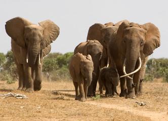 Elefanten II