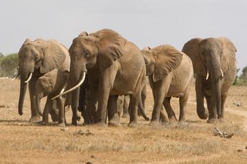 Elefanten III