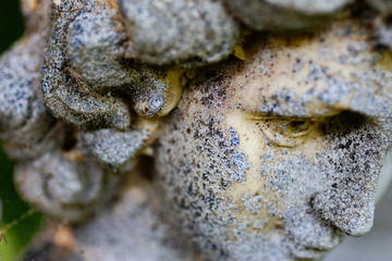 Face of Angel with limited depth of field