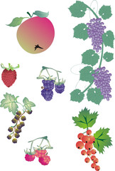 different berry collection