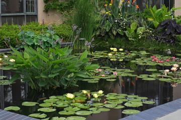 Aquatic Garden