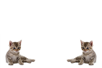 kittens on the left and right side, ideal for