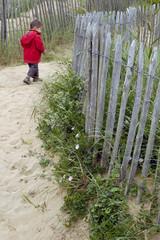 petit garçon en ballade sur la plage