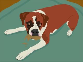 Tuinposter Honden boxer dog