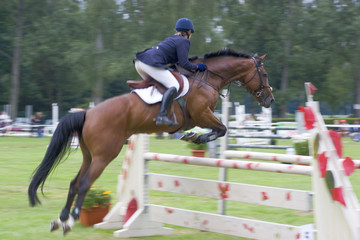 Jumping horse at a competition. Focus on the head of the horse