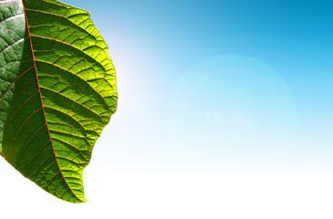 Wall Mural - Fresh green spring leaf against blue sky