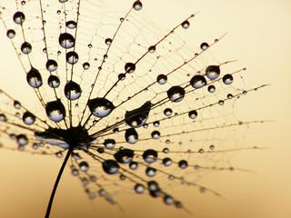 In de dag Macro dandelion seed