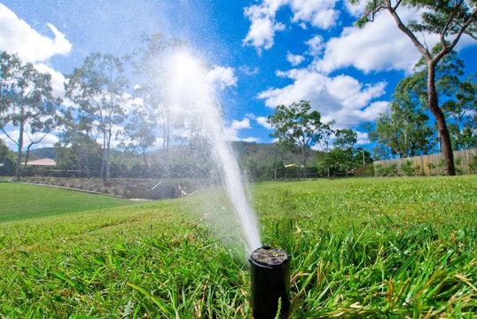 Sprinkler watering lawn grass