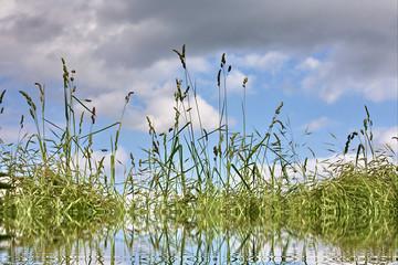 Corn field with lake