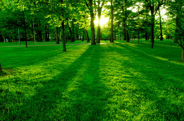 Wall Murals Green Low setting sun in green park casting long shadows