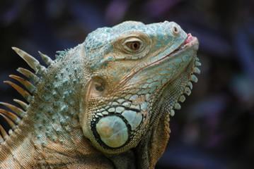 reptile couleur