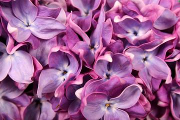 Fond de hotte en verre imprimé Hortensia Lilac