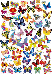 Lots of different multicolored butterflies - vector illustration