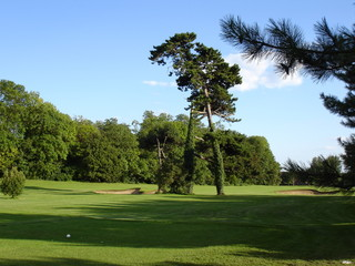 Trees on the golf course
