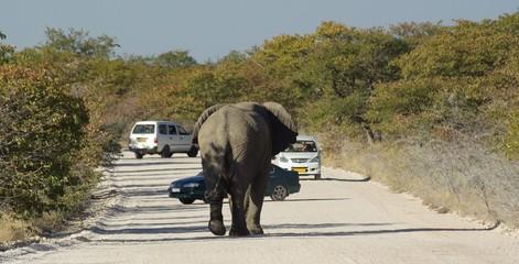 Rencontre éléphant et voitures dans la réserve