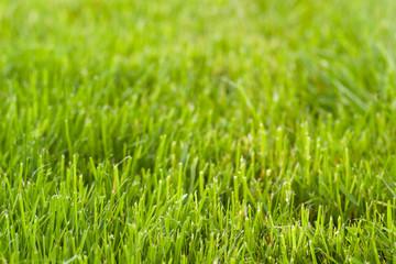 fresh cut grass background