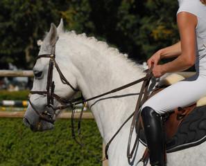 poney et sa cavalière sur la paddock de CSO