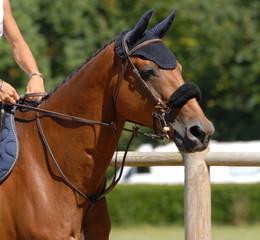 cheval de CSO