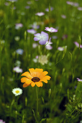 massif de fleur