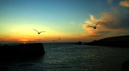Cornish Sunset Birds