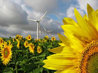 Photo sur cadre textile Tournesol énergie renouvelable