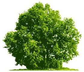 illustration of tree isolated