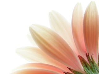 Poster de jardin Macro pink gerbera