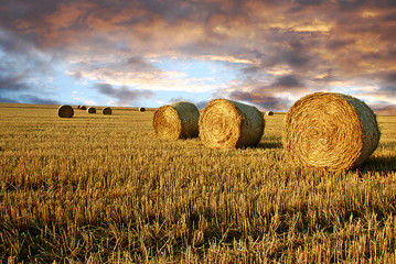 Fototapeta Straw rolls and dramatic sky obraz