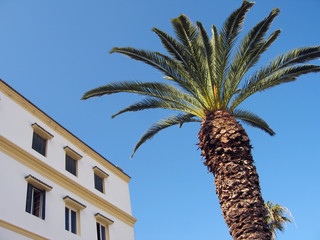 Palm and building