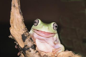 funny frog on black background