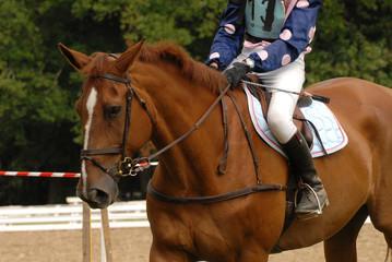 cheval et son cavalier avant un parcours de cross