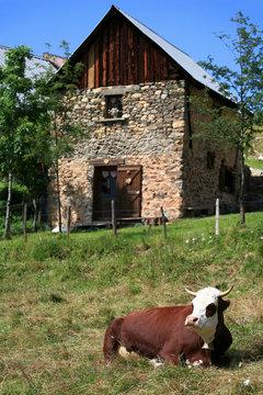 Vache et ferme
